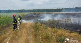 Duży pożar ścierniska w Sokołowicach