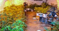 Marihuana zabezpieczona