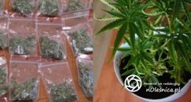 Zatrzymani z marihuaną