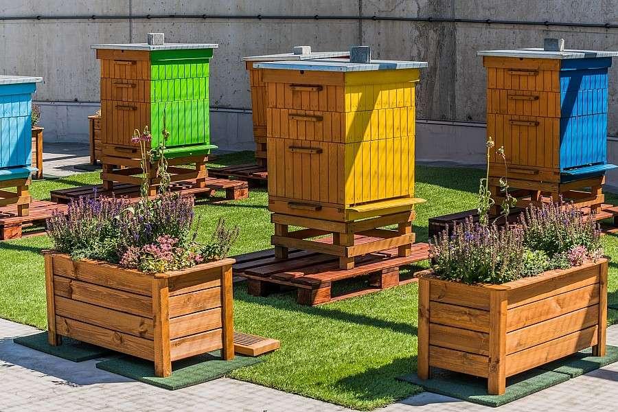 Miejsca we Wrocławiu, tysięcy pszczół dachu Wroclavii - zdjęcie, fotografia