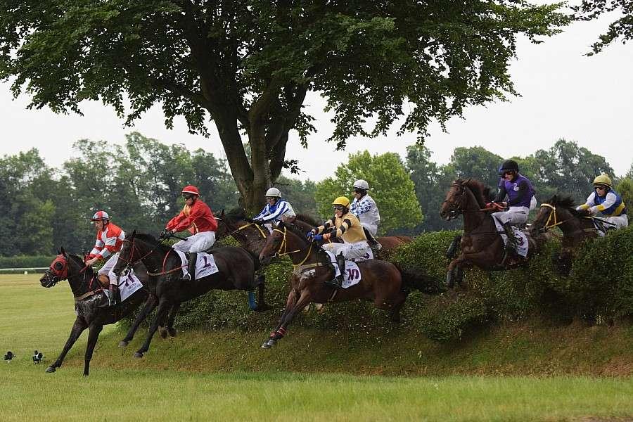 Wyścigi konne, Tłumy partynickim torze wyścigów konnych - zdjęcie, fotografia