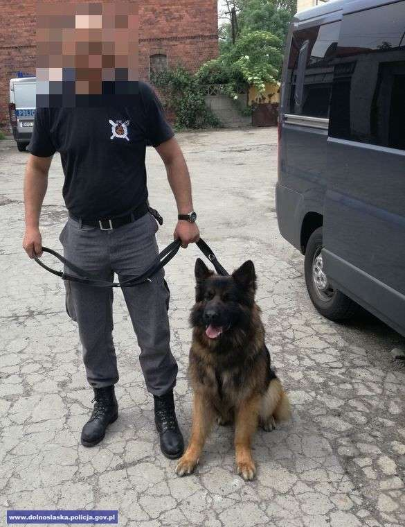 24wroclaw, Górowscy policjanci walce przestępczością narkotykową osoby zatrzymane - zdjęcie, fotografia