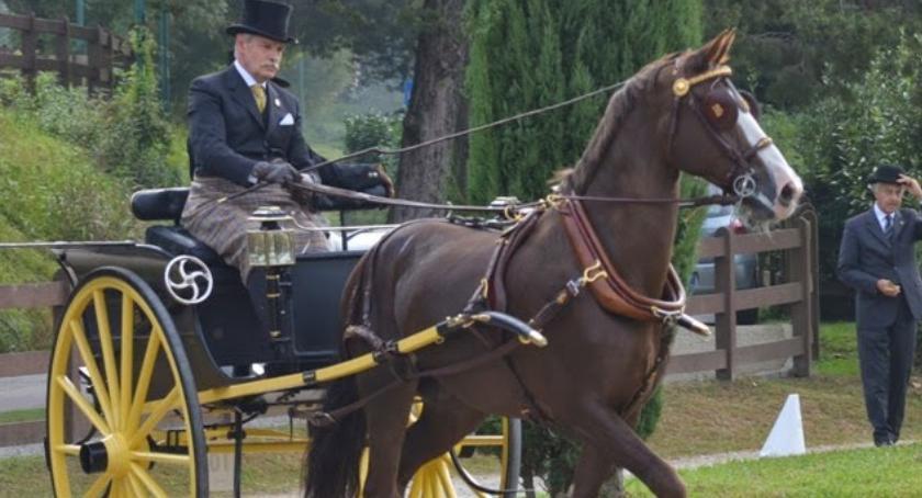 Wyścigi konne, Pokaz historycznych zaprzęgów konnych - zdjęcie, fotografia