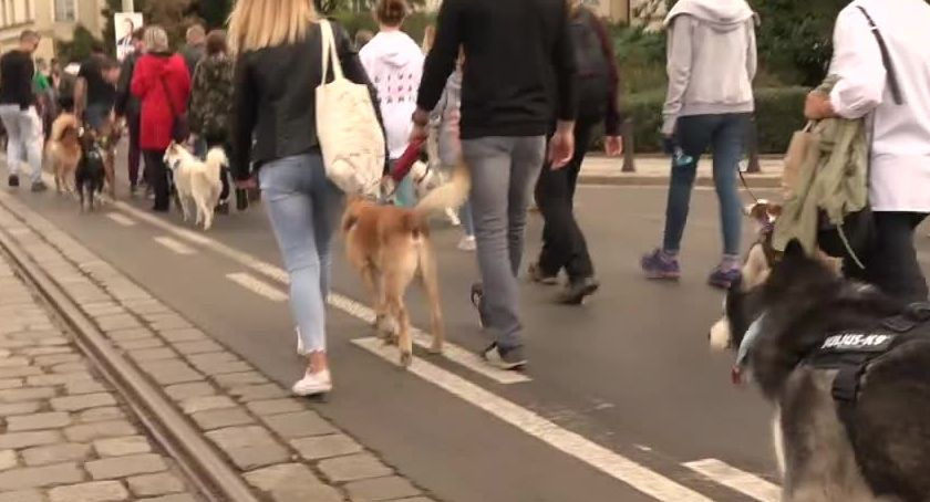 Społeczeństwo, Ulicami Wrocławia przeszła charytatywna parada - zdjęcie, fotografia