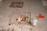 ZAMUROWANY pies z na podwórku! Skamlanie, pisk i bestialskie zachowanie.