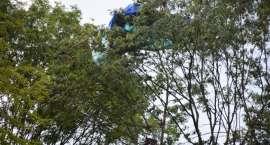 Paralotniarz zawisł na drzewie. Pomagali mu strażacy