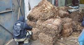 Wspólne działania SG, CBŚP i KAS doprowadziły do likwidacji nielegalnej fabryki krajanki tytoniowej