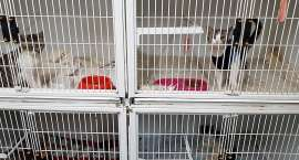 Niepotwierdzone zarzuty wobec schroniska dla zwierząt