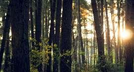 Chcesz poprawić czystość powietrza w swojej okolicy? Chroń lasy.