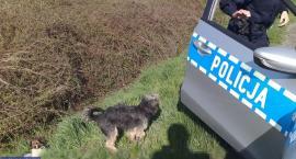 Pies pilnował przy drodze rannego towarzysza. Pomogli im policjanci