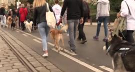 Ulicami Wrocławia przeszła charytatywna psia parada