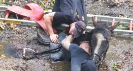 Koń tonął w błocie. Ratowali go strażacy.