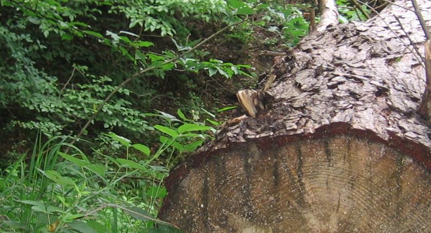 Felietom, Śmierć lesie - zdjęcie, fotografia