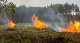 Sezon wypalania traw rozpoczęty