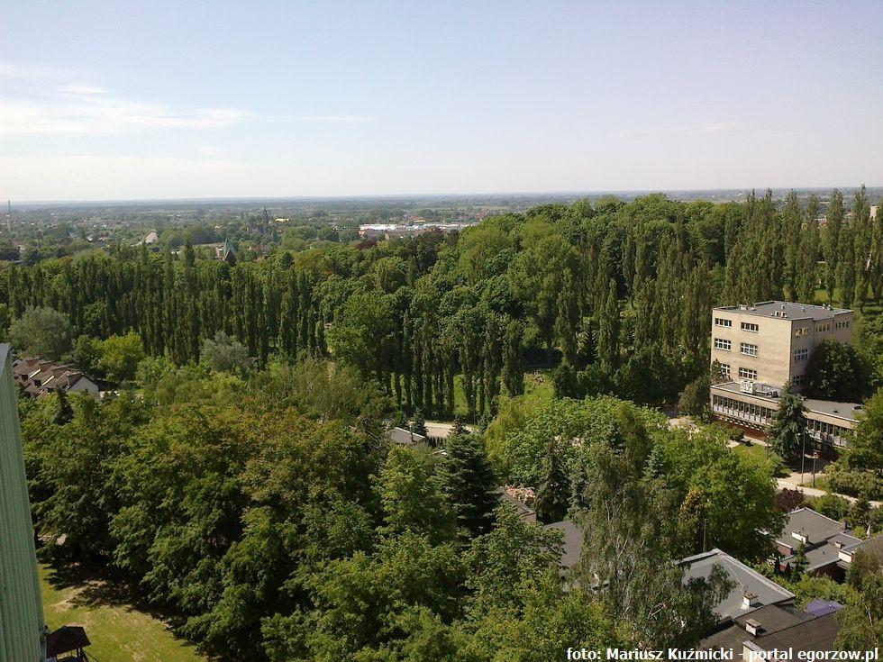 Ekologia - Zwierzęta, lipach ulicy Kostrzyńskiej hibernują nietoperze - zdjęcie, fotografia