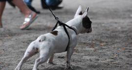 Grupa mieszkańców Gorzowa chce stworzyć w mieście tzw. ekoskwer dla psów