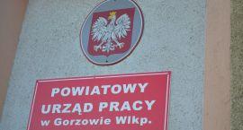 Bezrobocie w Gorzowie wynosiło w maju 4,6 procenta