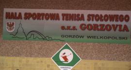 GKS MojeBermudy.pl Gorzovia Gorzów - Poltarex Pogoń Lębork 18.11.2017r., godz. 16