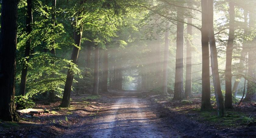 Informacje  z Wolanowa i okolic, Pożyteczne zalesienia - zdjęcie, fotografia