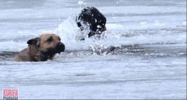 Pod psami załamał się lód - strażacy w akcji