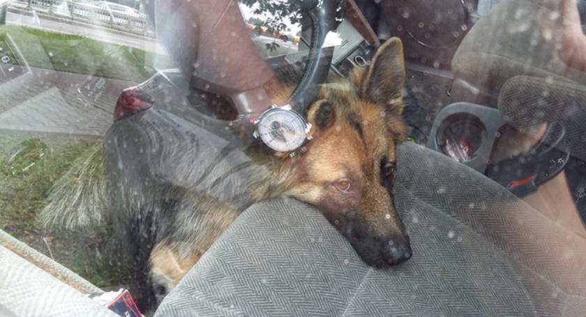 Zwierzęta, Uratowali zwierzęta rozgrzanego Akcja straży miejskiej Jerozolimskich - zdjęcie, fotografia