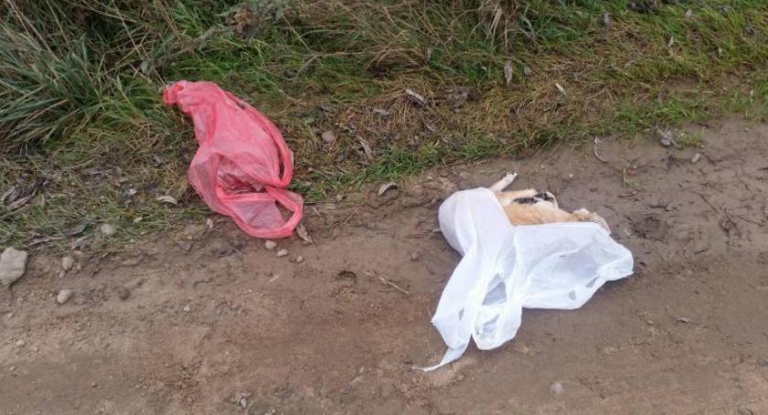 Zwierzęta, Białołęka martwy znaleziony reklamówce drodze [ZDJĘCIA] - zdjęcie, fotografia