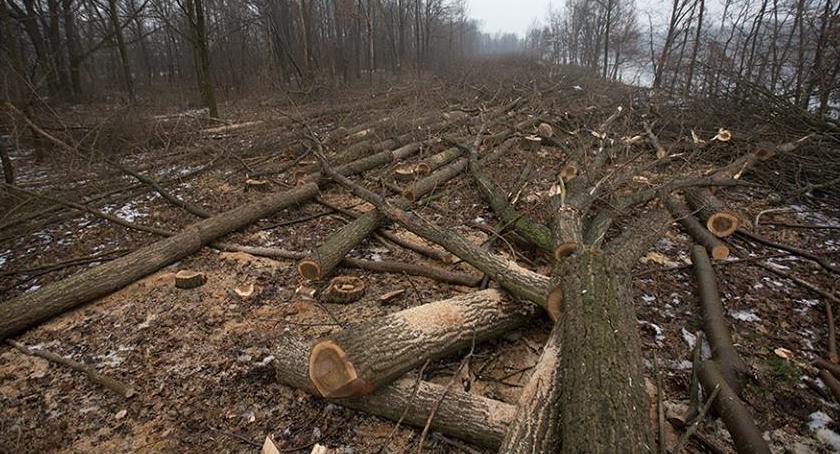 Zieleń - parki, Stało się! Ruszyła masowa wycinka drzew Kanale Żerańskim - zdjęcie, fotografia