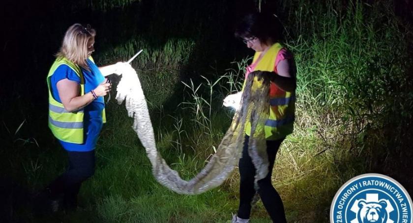 Zwierzęta, Ponad metrowa wylinka znaleziona Wisłą Trwają poszukiwania węża - zdjęcie, fotografia