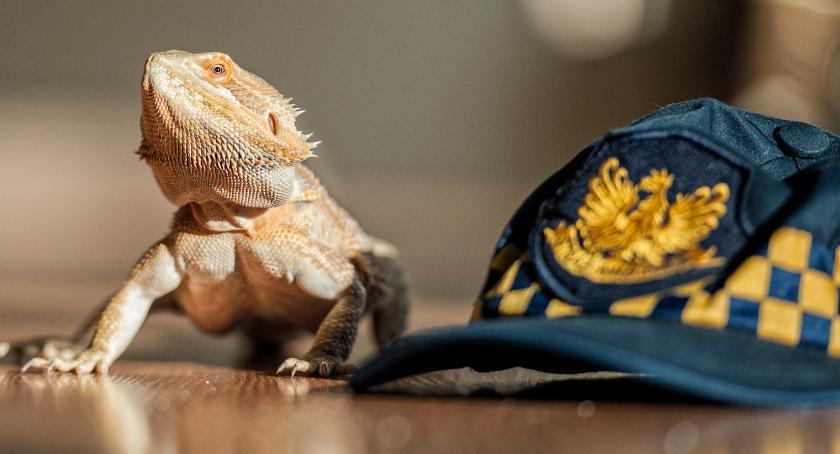 Zwierzęta, odłowionych zwierząt interwencji miesięcznie Ekopatrol akcji [ZDJĘCIA] - zdjęcie, fotografia