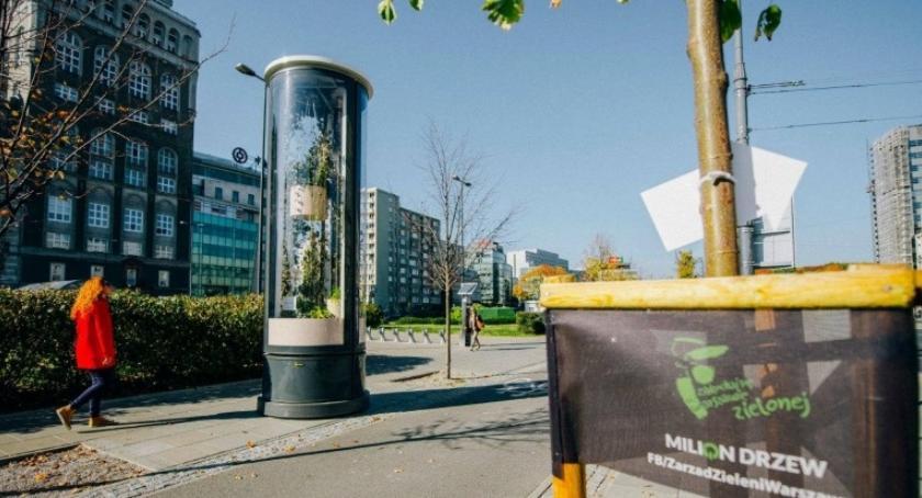 Zieleń - parki, tęsknoty latem Roślinne kompozycje gablotach stanęły ulicach miasta - zdjęcie, fotografia