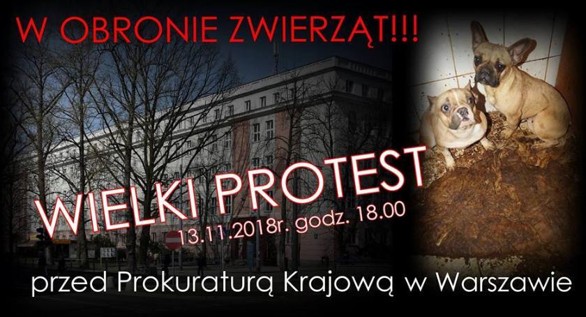 Zwierzęta, Protest obronie zwierząt dzisiaj przed prokuraturą - zdjęcie, fotografia