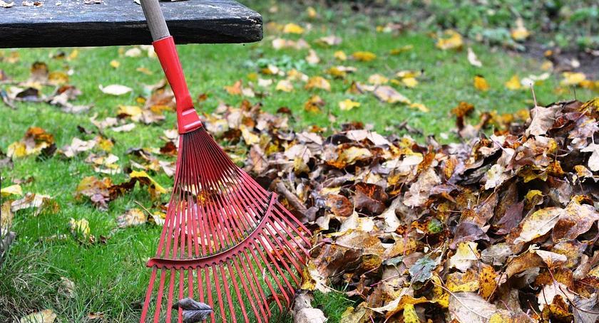 Zieleń - parki, Grabienie liści szkodliwe gleby mikroorganizmów zwierząt! - zdjęcie, fotografia