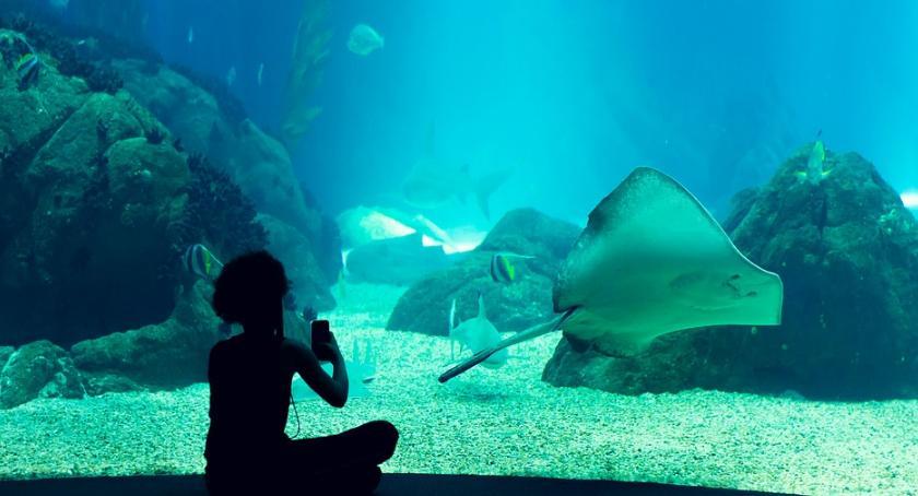 NEWS, Oceanarium wybieg afrykański imponujące plany stołecznego - zdjęcie, fotografia