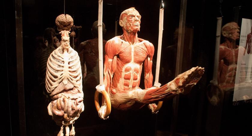 PKiN zaprasza, World niesamowita wystawa zmianach ciele [ZDJĘCIA] - zdjęcie, fotografia