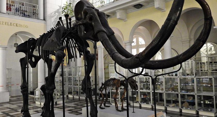 Historia Warszawy, wizytą Muzeum Archeologii Odwiedzamy mamuta budowy stacji metra [ZDJĘCIA] - zdjęcie, fotografia