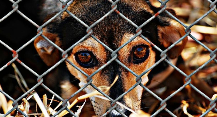 Zwierzęta, Schroniska wstrzymują adopcje psów - zdjęcie, fotografia