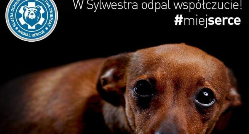 Zwierzęta, Ruszył Sylwestrowy Patrol Animal Rescue Polska - zdjęcie, fotografia