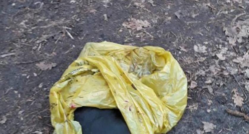 Zwierzęta, Martwy worku Animal Rescue poszukuje oprawcy [DRASTYCZNE ZDJĘCIA] - zdjęcie, fotografia