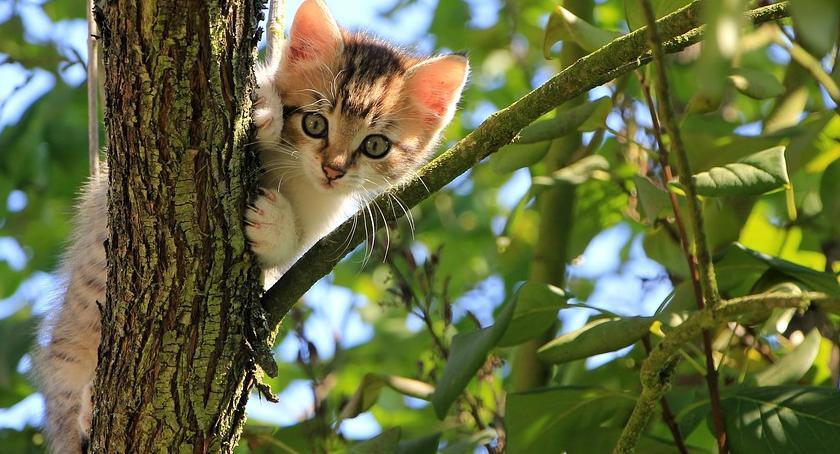 Zwierzęta, Międzynarodowy Dzień Przyjdźcie OCHOTA - zdjęcie, fotografia