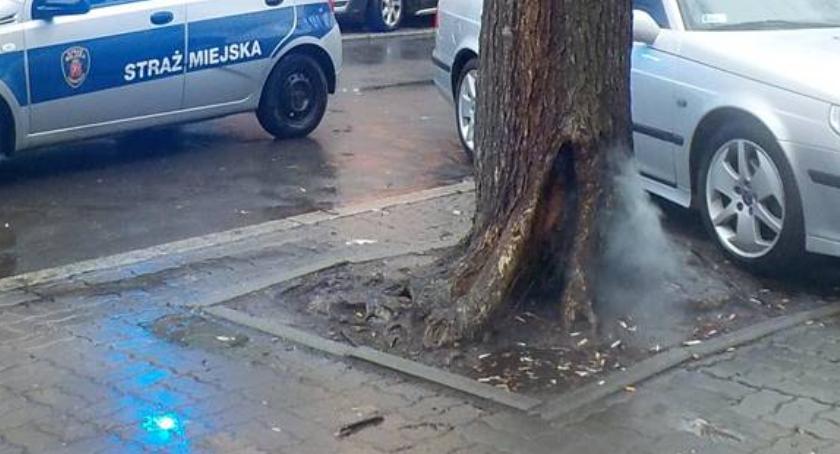 Pożary, Zapaliło wnętrze drzewa [ZDJĘCIA] - zdjęcie, fotografia