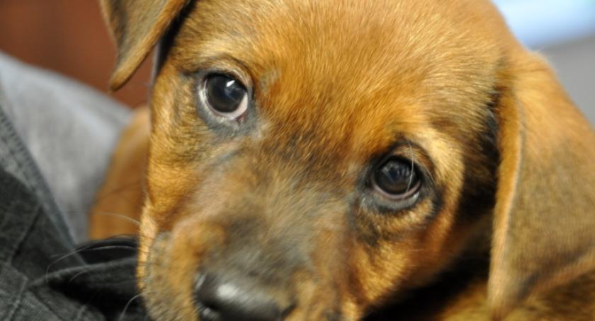 Zwierzęta, Słoik podbił serca strażników miejskich [ZDJĘCIA] - zdjęcie, fotografia