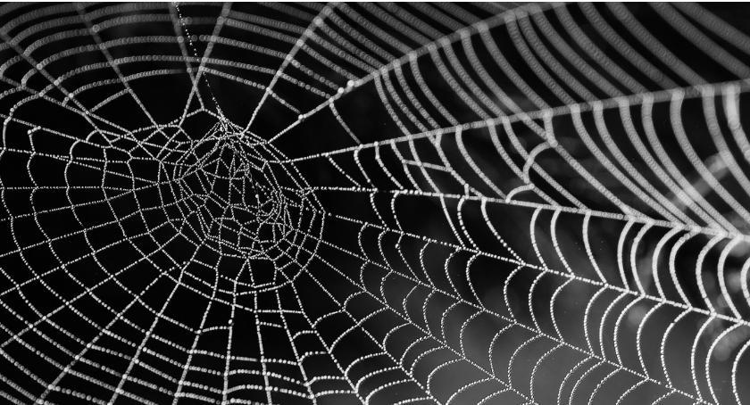 PKiN zaprasza, Spider byłby zachwycony! Zapraszamy świata pająków - zdjęcie, fotografia