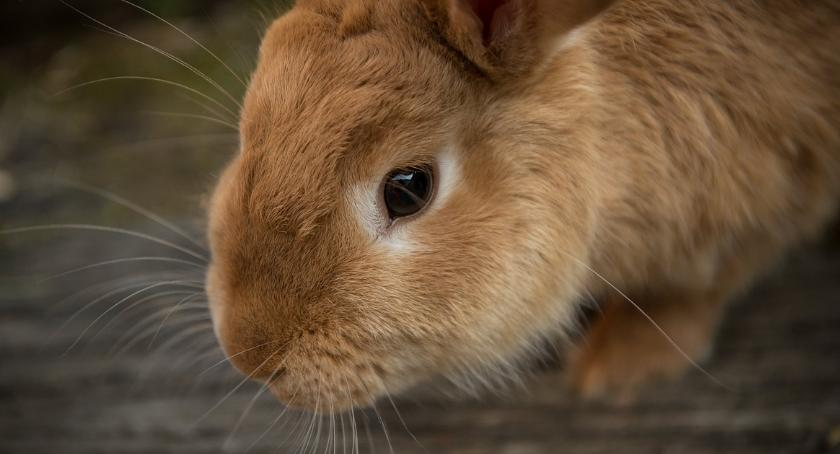 Zwierzęta, Ktoś porzucił królika klatce schodowej - zdjęcie, fotografia