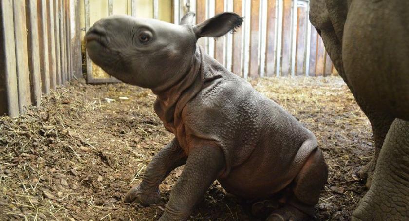 Zwierzęta, małego Junga! Słodziak kończy dzisiaj roczek! - zdjęcie, fotografia
