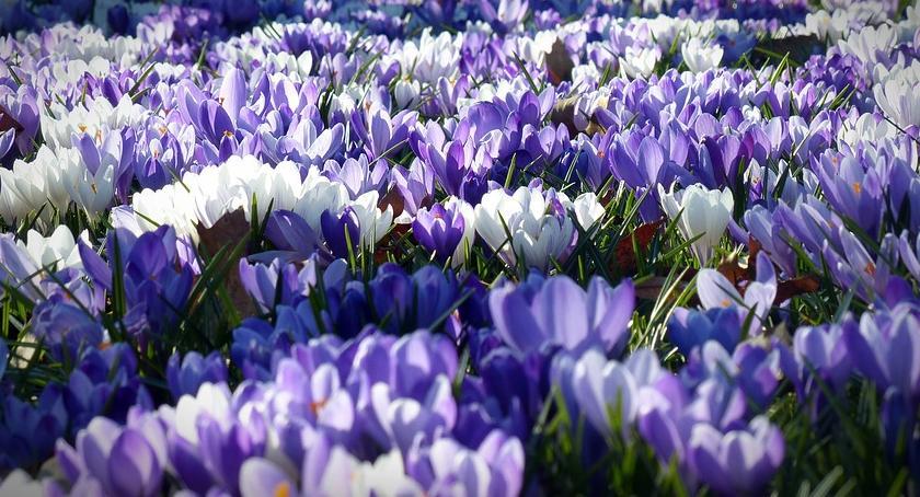 NEWS, końcu jest! Wiosna!!! - zdjęcie, fotografia