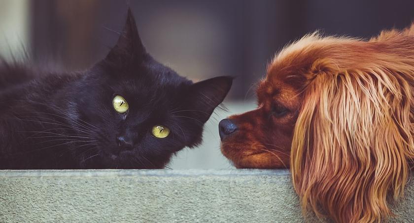 Zwierzęta, Ruszyło bezpłatne czipowanie kotów psów - zdjęcie, fotografia