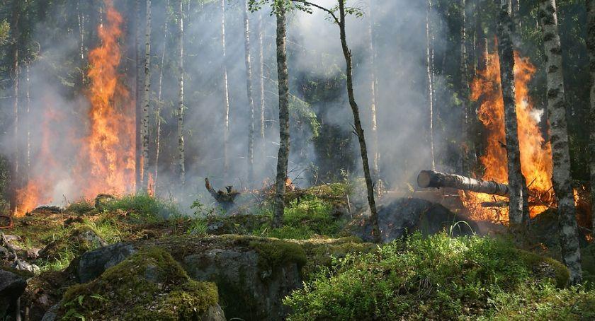 Bezpieczeństwo, Pożary podwarszawskich lasach trzeba uważać - zdjęcie, fotografia