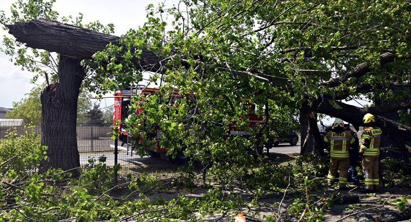 Bezpieczeństwo, Dzisiaj burze zostawiajmy drzewach może skończyć [ZDJĘCIA] - zdjęcie, fotografia