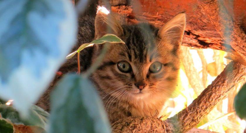 Zwierzęta, Zapraszamy Warszawski Dzień Zwierząt - zdjęcie, fotografia