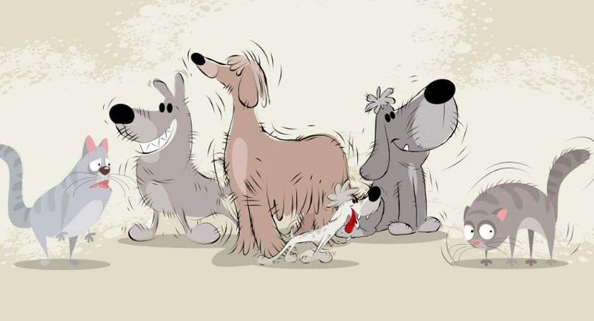 Zwierzęta, PupiLove targi Warszawie! czerwca - zdjęcie, fotografia